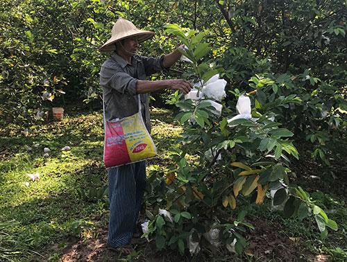 Ông Vũ Văn Quyết xã Tuy Lộc, huyện Cẩm Khê  làm giàu từ mô hình trồng cây ăn quả và nuôi cá.