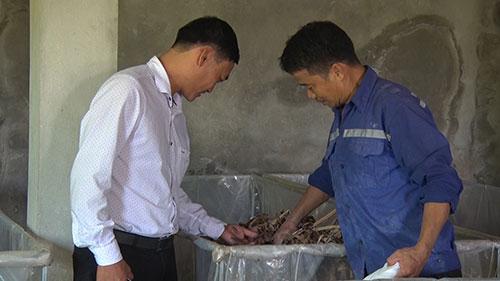 Mô hình tổng hợp nuôi dế thương phẩm kết hợp với nuôi thỏ sinh sản  và trùn (giun) quế mang lại thu nhập ổn định tại xã Yên Tập