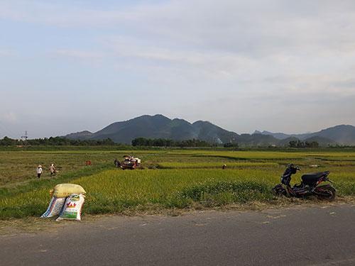 Huyện Cẩm Khê thu hoạch lúa Đông Xuân 2020
